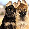 Dogs photo titled Dog icons