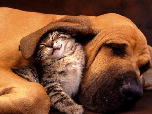 dog and kitty