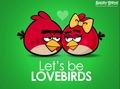 luv birds