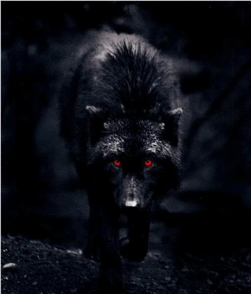Shadows Wolf Deathsie The Zufallig Anime Rp Foren Foto