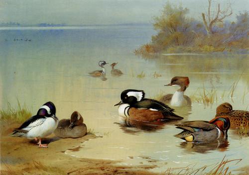 Archibald Thorburn