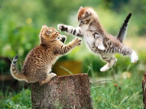 Funny 小猫