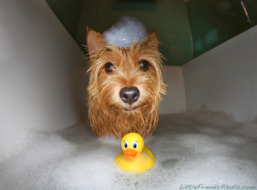 It's getting crowded in your bubble bath ;D
