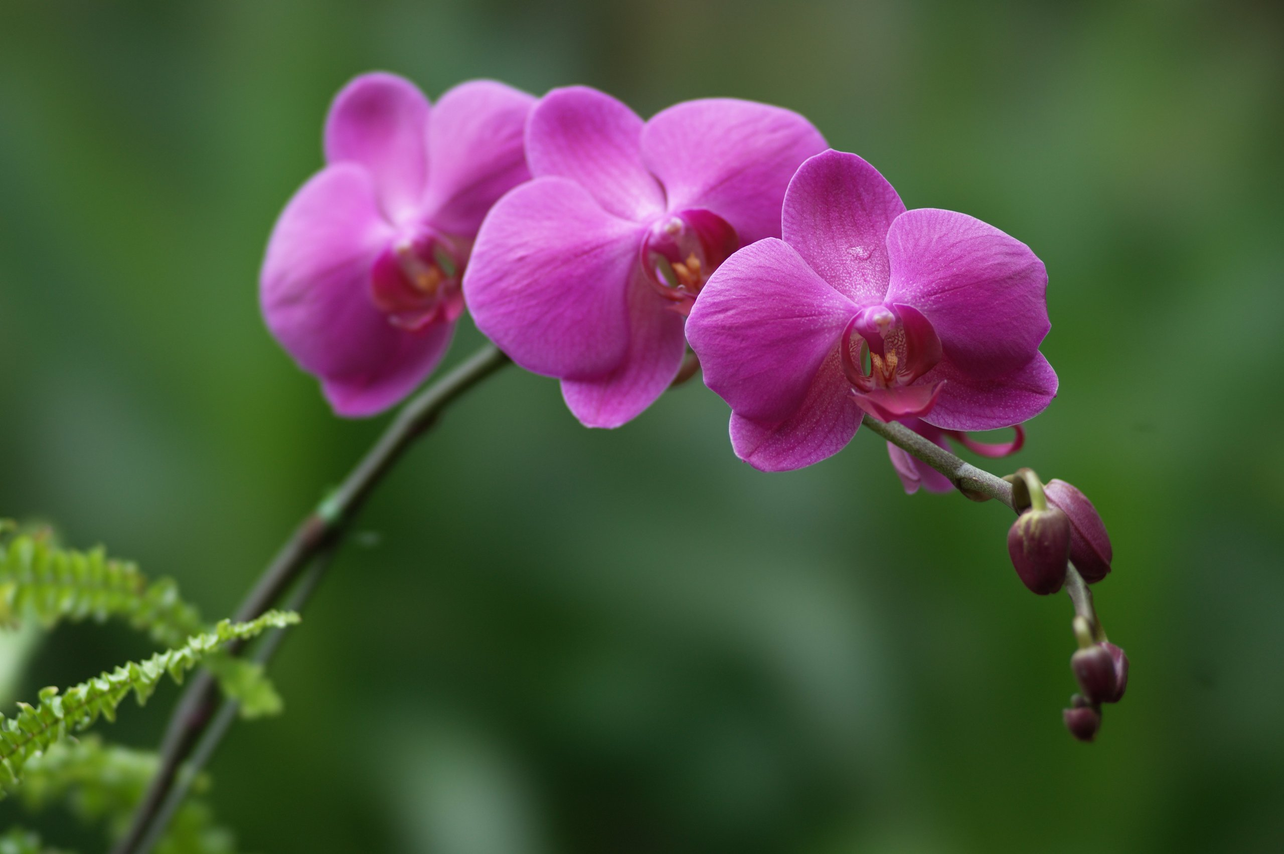 Orchid Flower Quotes  ...