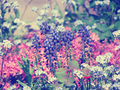 Purple Blumen