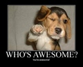 Who's Awesome? - being-awesome photo