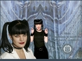 abby! - ncis wallpaper