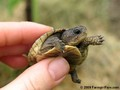 baby turtles &lt;3 - turtles photo