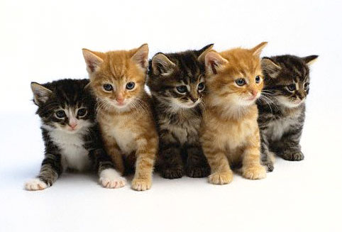 i googeld it - kittens Photo