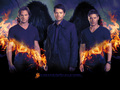 television - ☆ Supernatural ☆  wallpaper