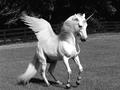 ☆ Unicorn
