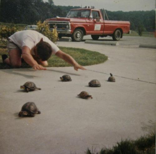 All hail the turtles!