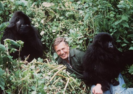 David Attenborough and Friends:)
