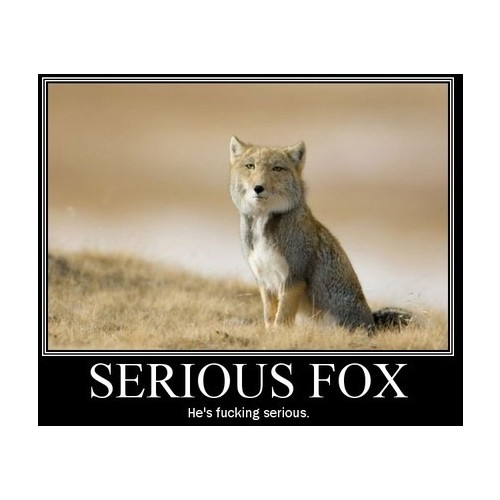 Serious rubah, fox