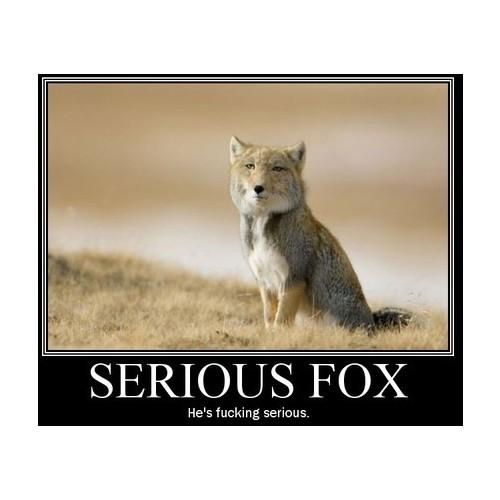 Serious 狐, フォックス