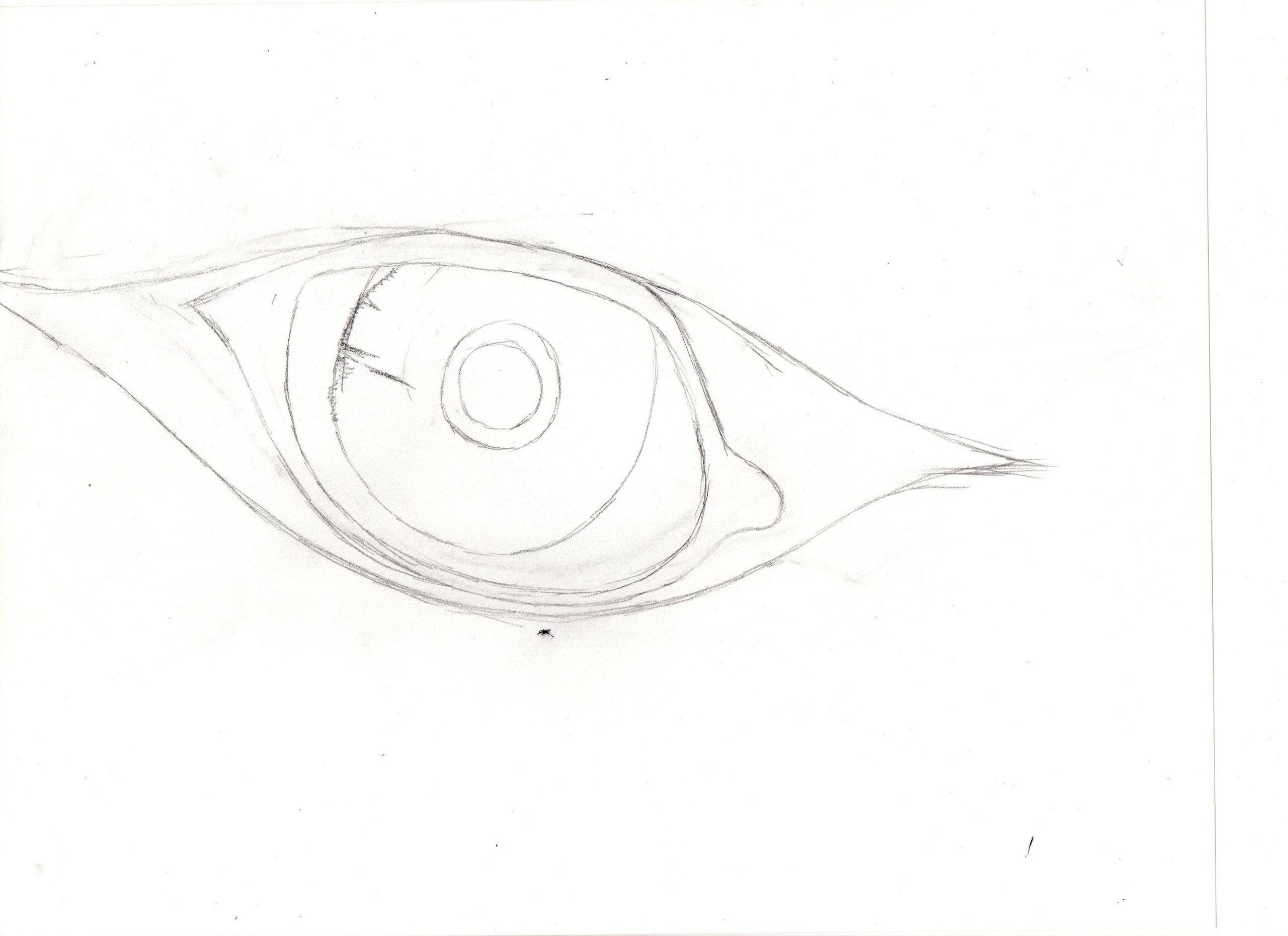 भेड़िया eye