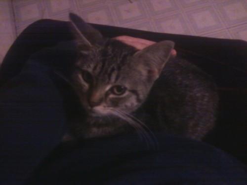 my kitten eevee