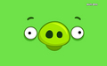 pig happy - angry-birds wallpaper