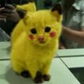 poor cat!!!