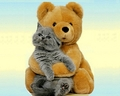Bear and Cat Wallpaper