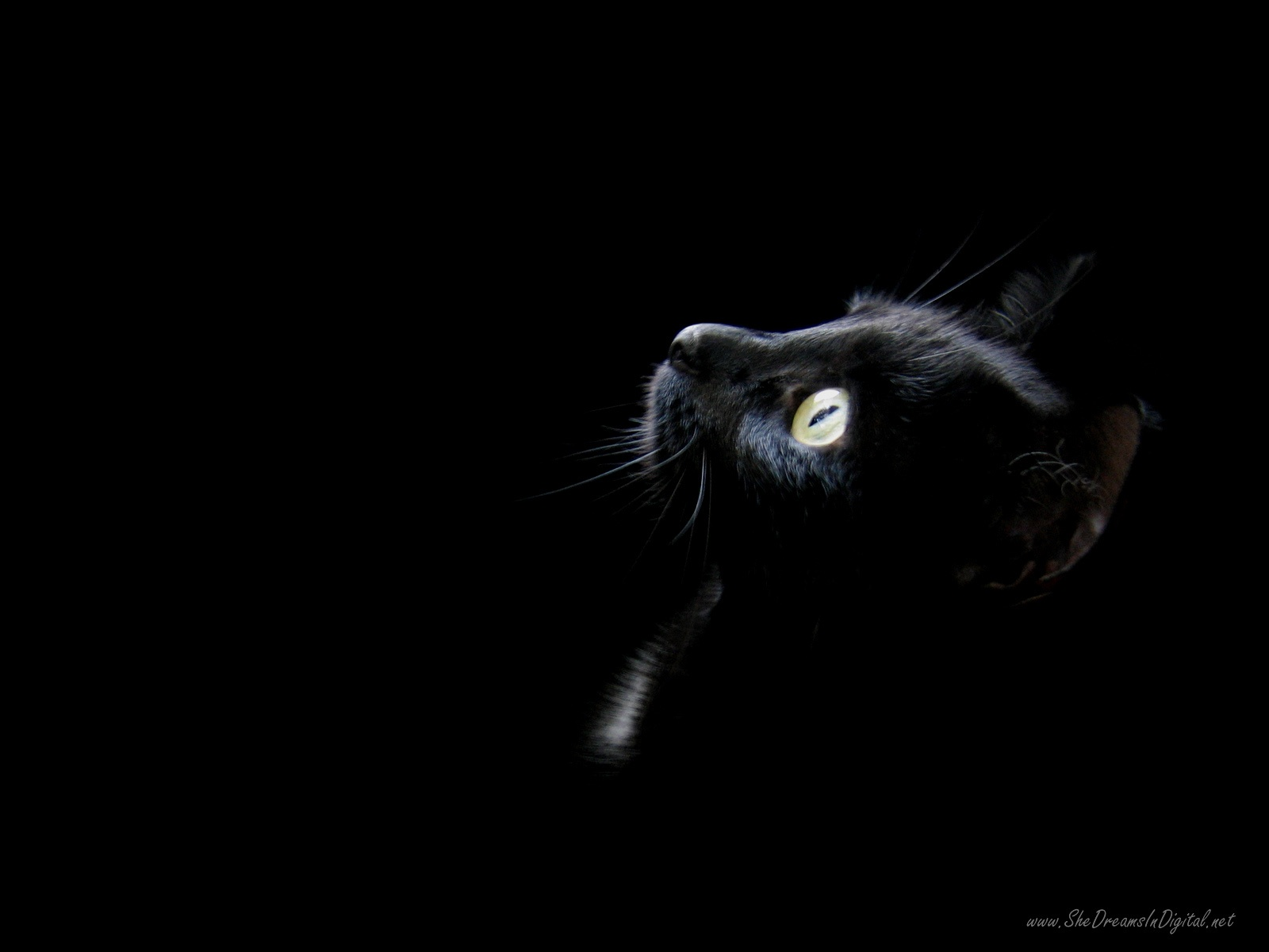 Black black cat wallpaper