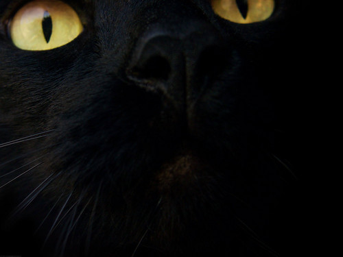 Black Cat 바탕화면