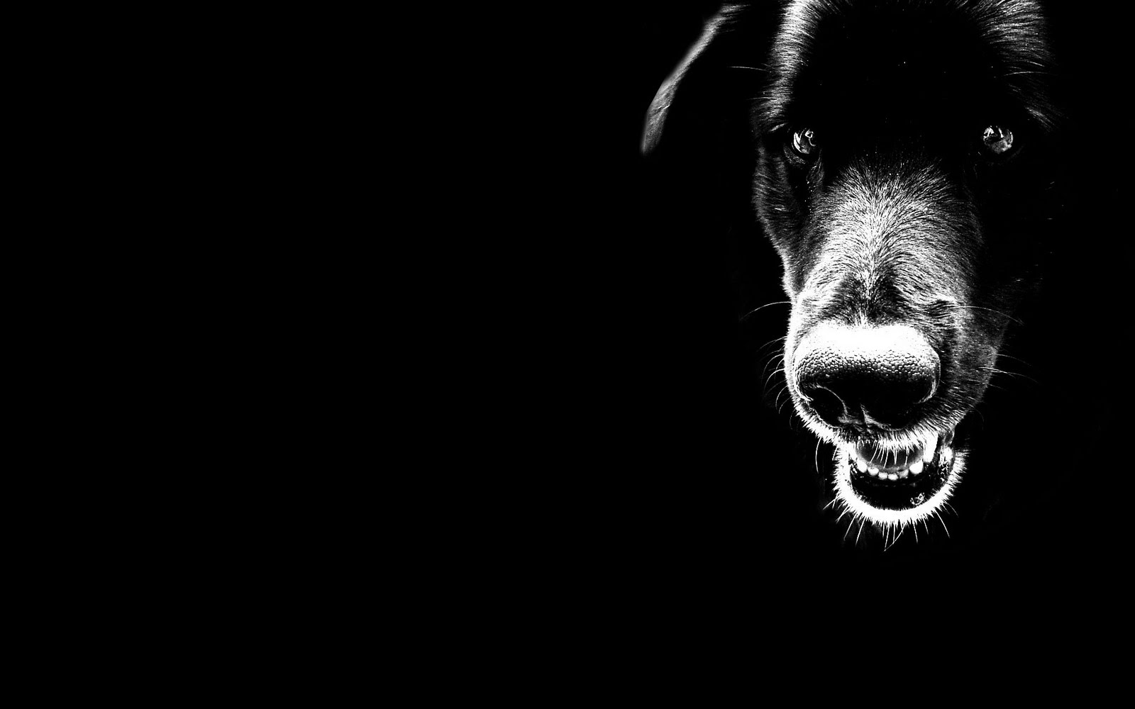 Black black dog wallpaper