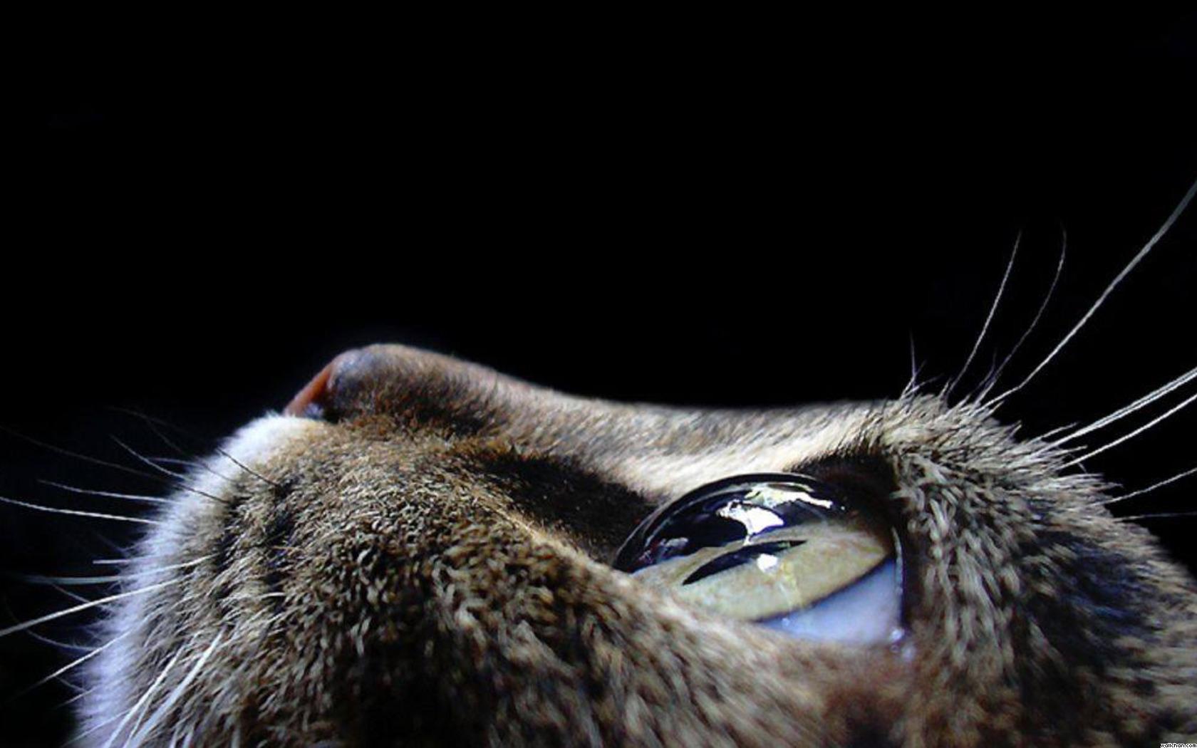 Eyes cat eye wallpaper