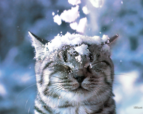 Cat in the Snow Wallpaper - cats Wallpaper