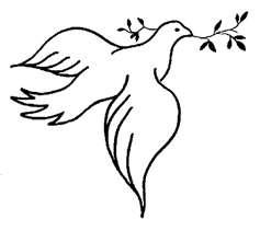 chim bồ câu, bồ câu Purity