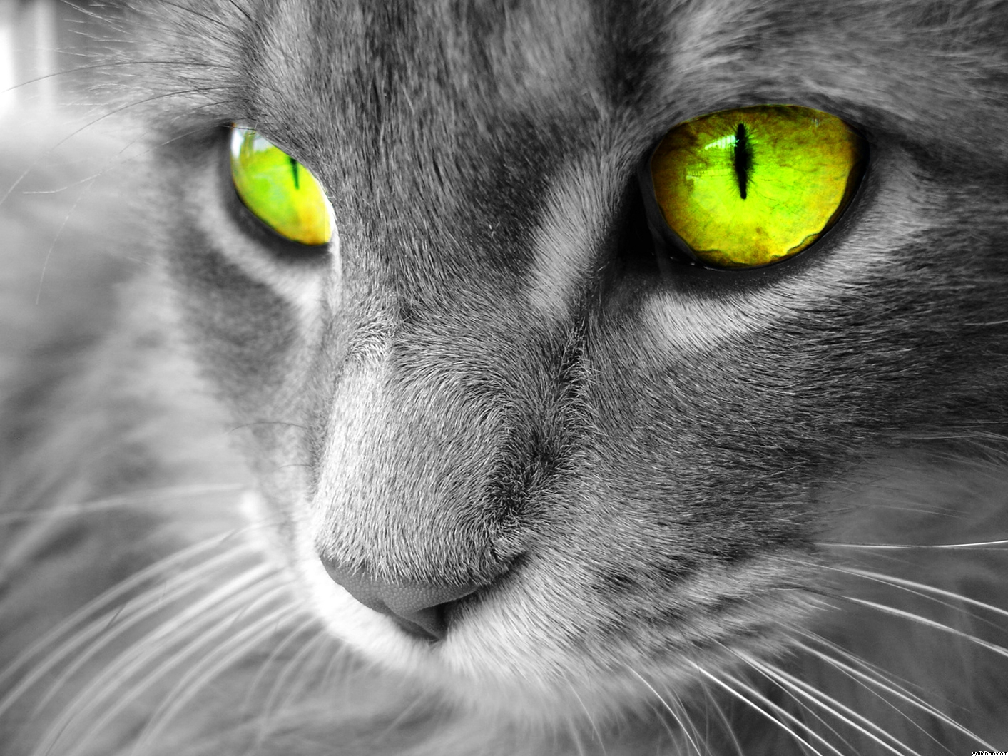 Cats with Green Eyes
