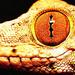Lizard Eye - eyes icon
