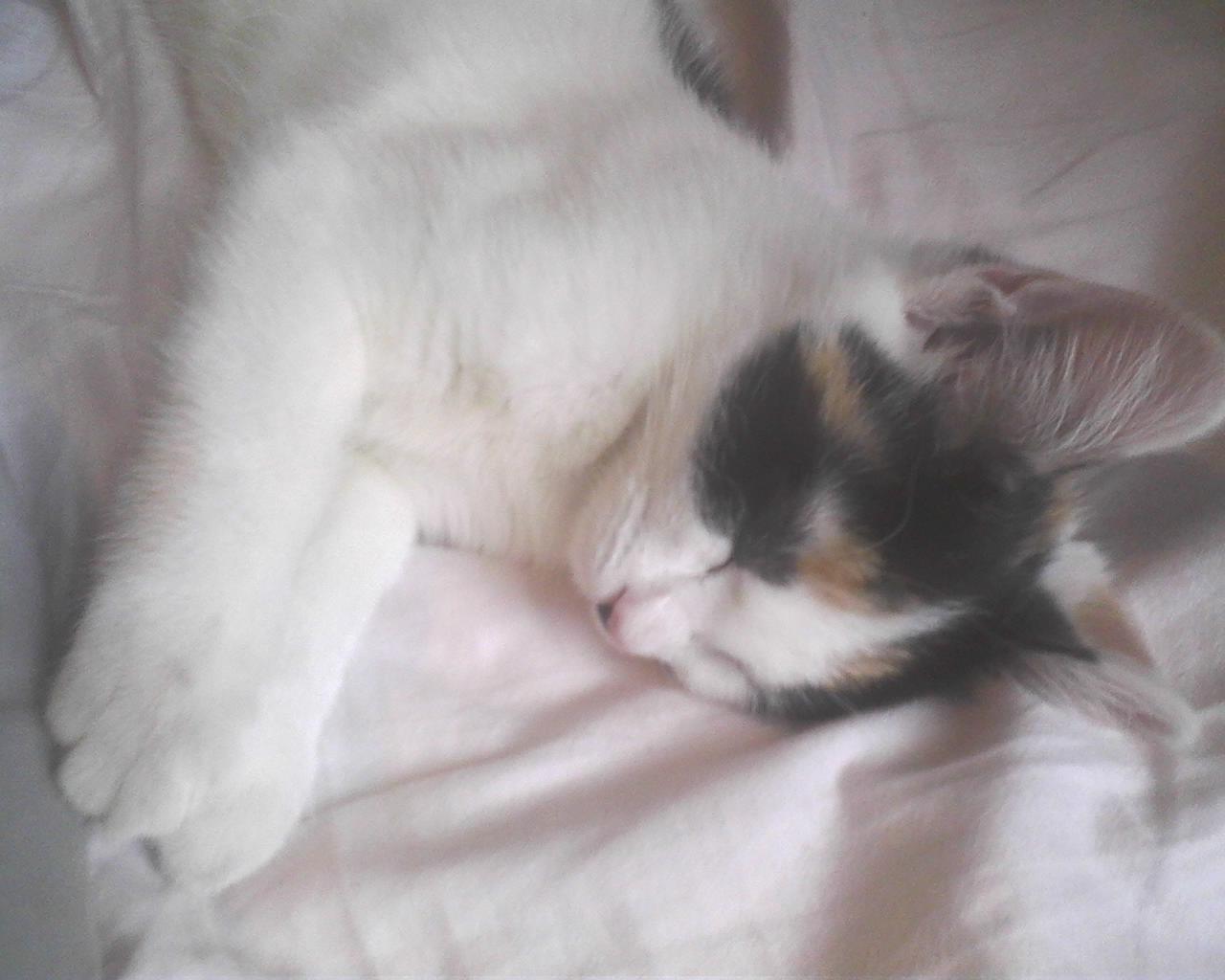 Cute kittens my beautiful sleeping baby