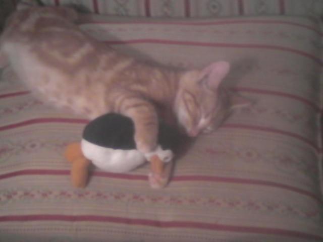 My cat is fan of TPOM too! lol XD
