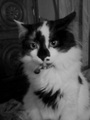 My kittie Tikussa! - darkwave photo
