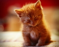 Nap Time Wallpaper - cats wallpaper