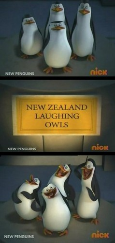 New Zealand Laughing....Penguins?