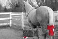 Red Bow - horses photo