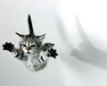 SuperKitty Wallpaper - cats wallpaper