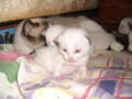 kitties!!!! 2