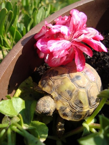 my tartaruga