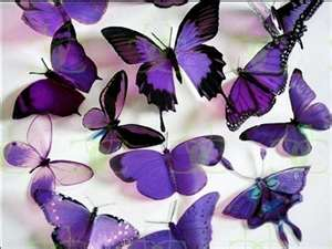purple butterflies - butterflies Photo