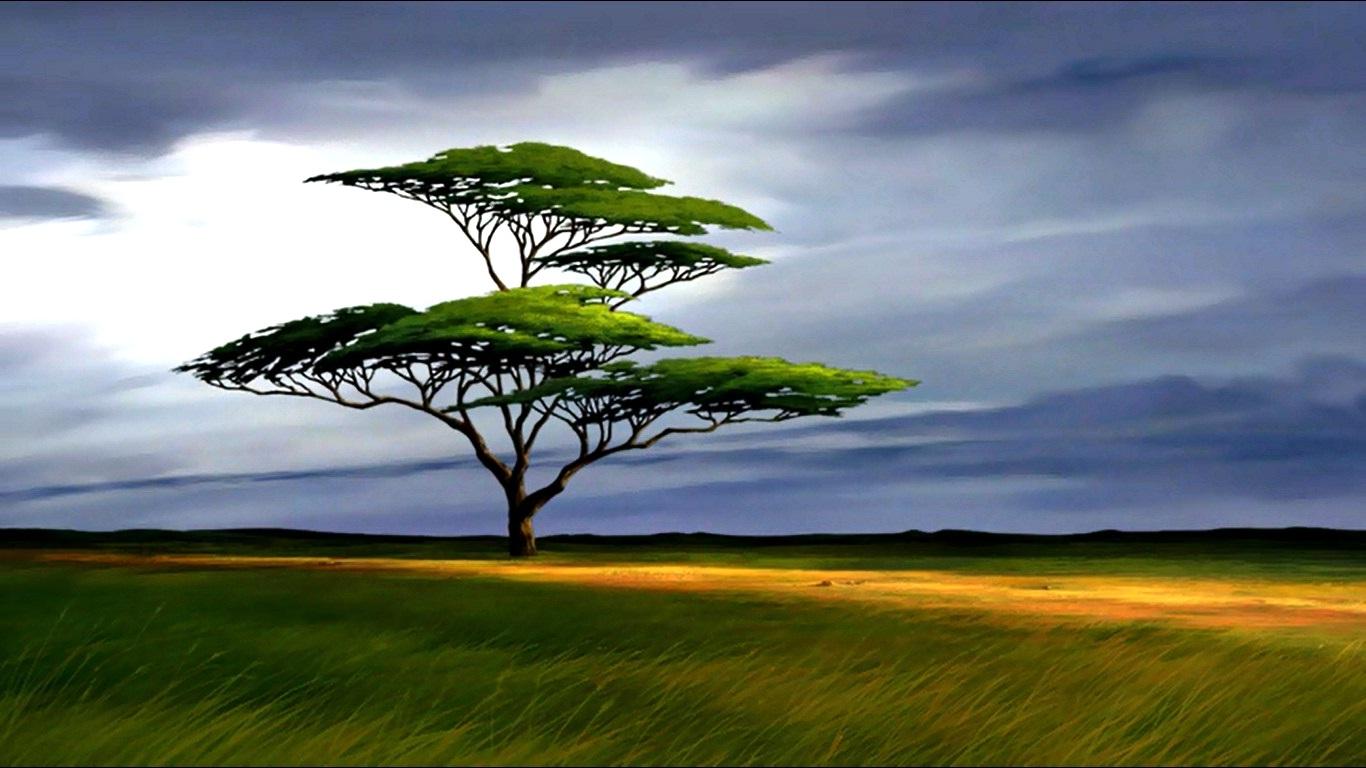 arbre wallpaper.