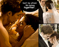 bella and edward - breaking-dawn-the-movie wallpaper