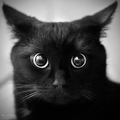 Black Cat by Lorem1pesum on deviantART - black photo
