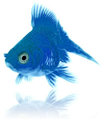 Blue karatasi la kupamba ukuta titled Blue samaki