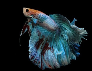 Blue poisson