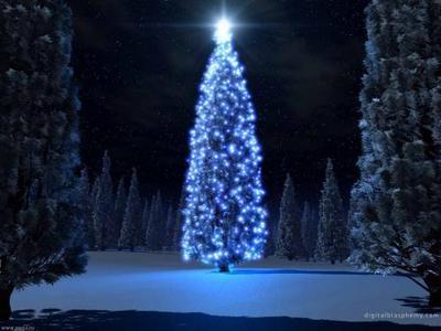 Blue navidad árbol