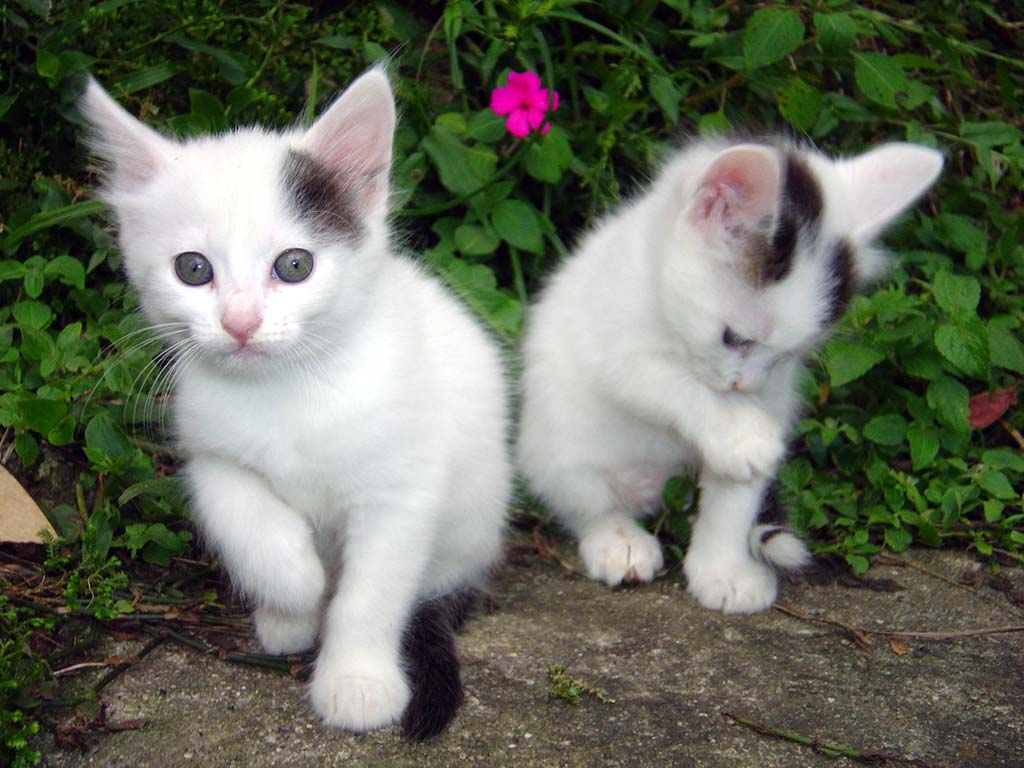 Cat Pictures Download Free