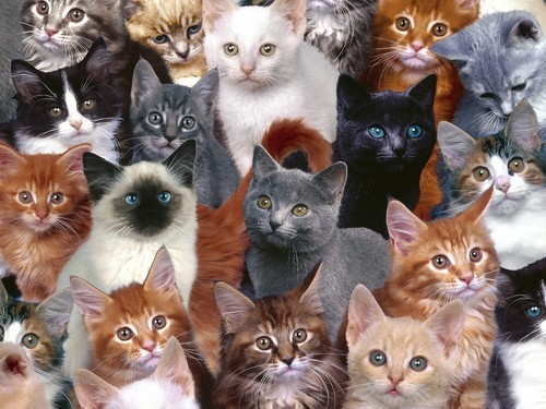 Cats wallpaper possibly with a tom, a cat, and a kitten titled Cats